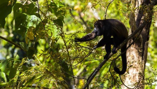 Dokument Ochrana divoké zvěře v Malawi