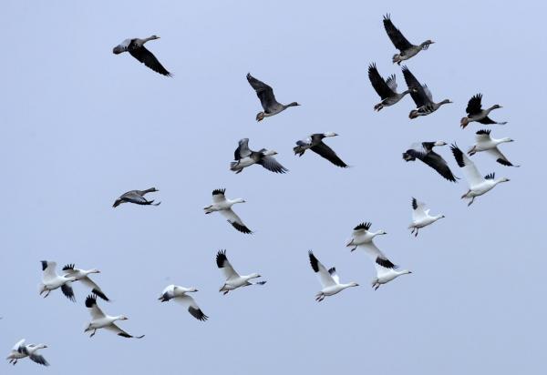 Dokument Putování tažných ptáků