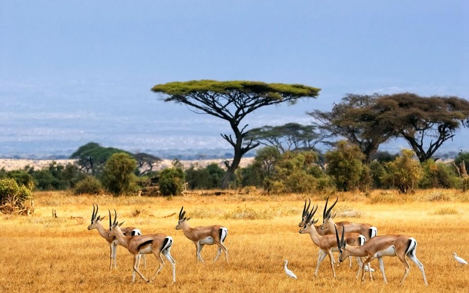 Dokument Africká savana