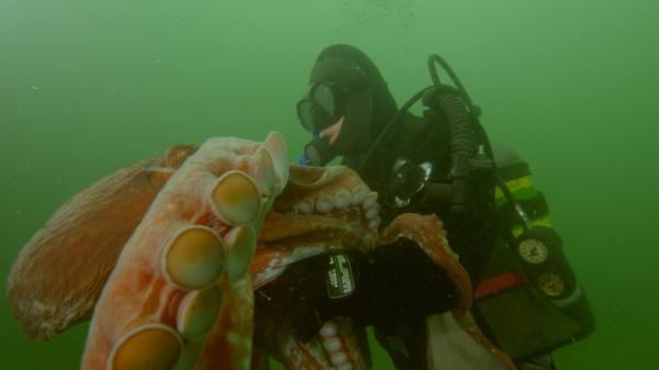 Člověk proti chobotnici
