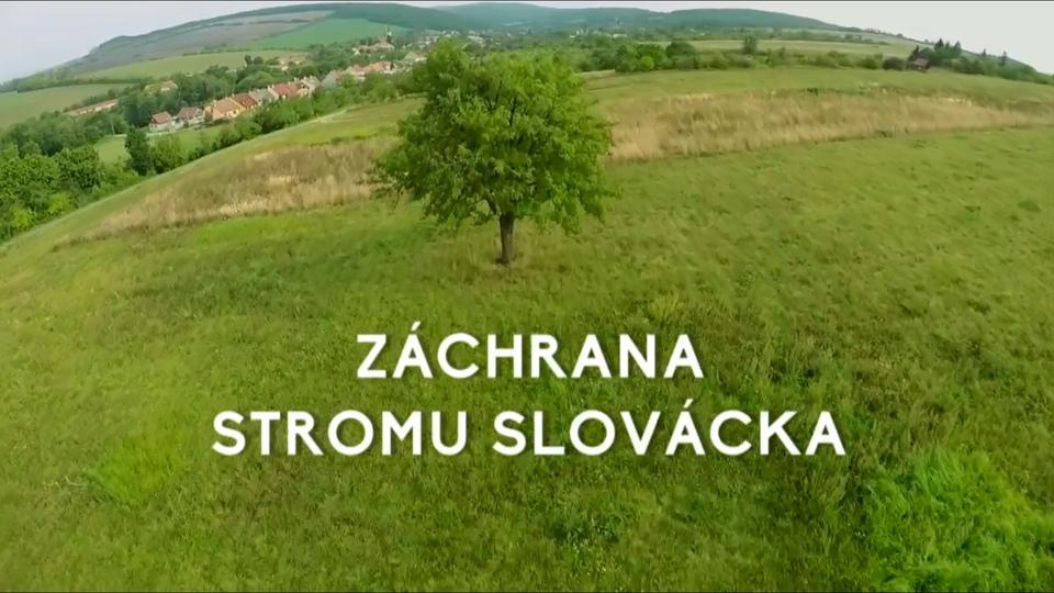 Dokument Záchrana stromu Slovácka