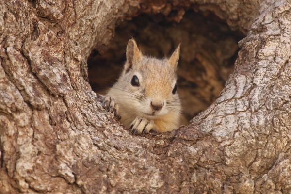 Dokument Veverky – skryté v kmenech dubů