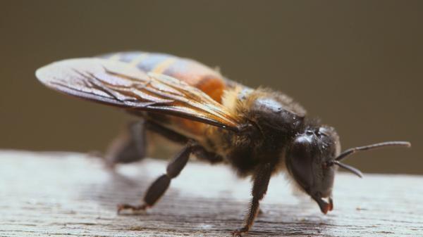 Majstri včiel