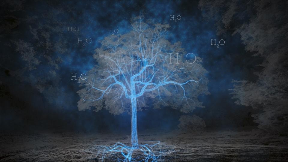 Dokument Tajemné stromy - dokonalé přírodní systémy