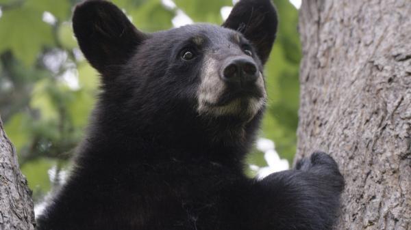 Dokument Rok v kanadské divočině