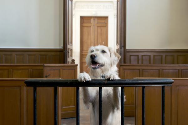 Dokument Majú zvieratá práva?