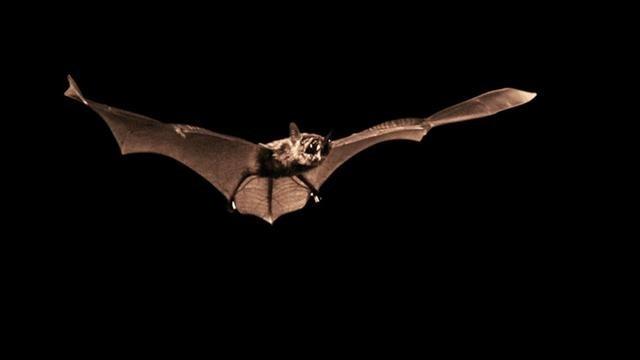 Dokument Zabiják netopýrů