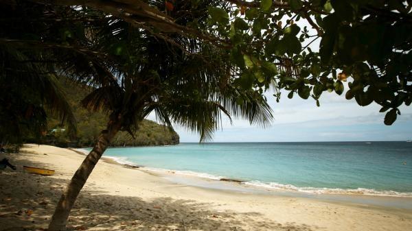 Malé perly Karibiku