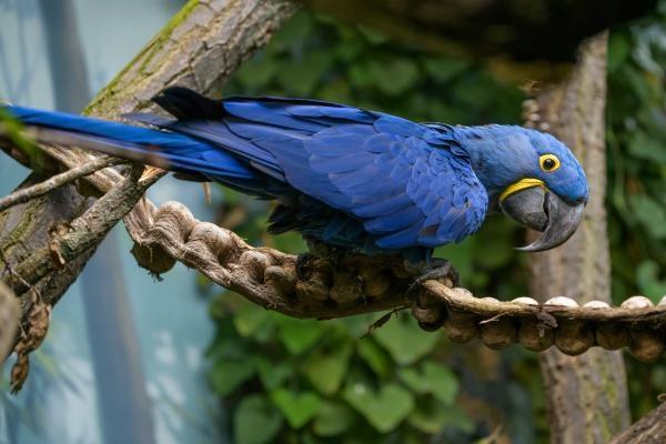 Dokument Rákosův pavilon: Svět vzácných papoušků