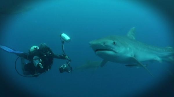 Dokument Zvědavost žraloků