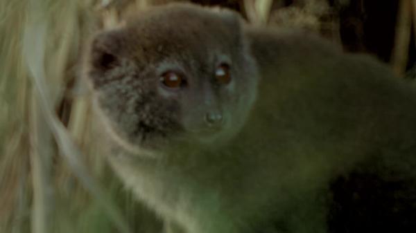 Dokument Alaotra: Ohrožený skvost Madagaskaru