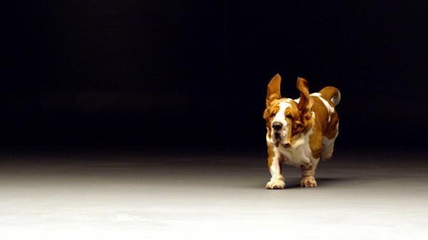 Tajný život psů