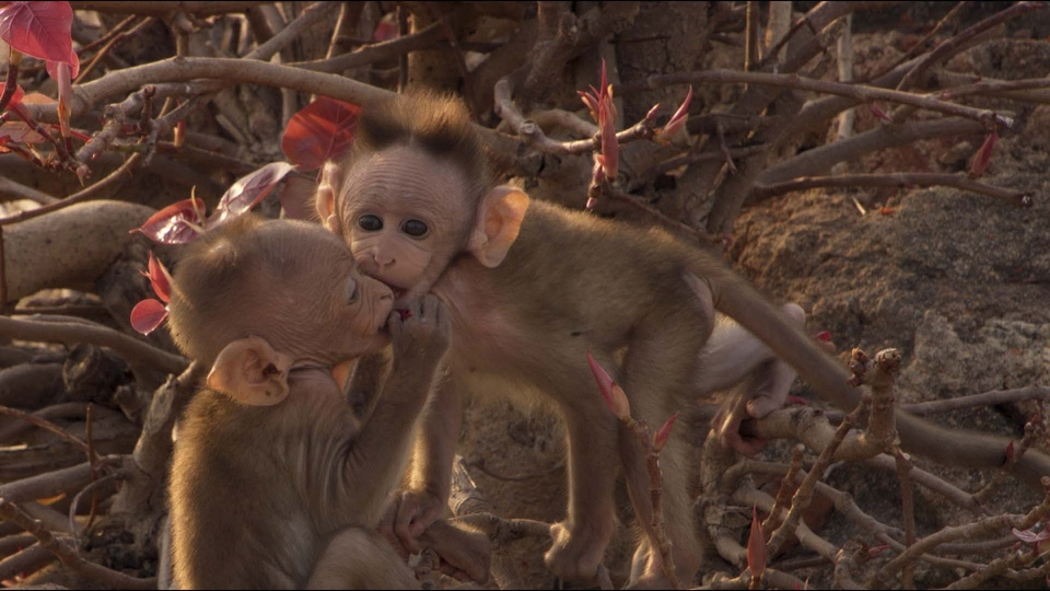 Dokument Opice v nás