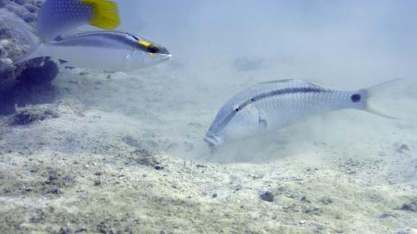 Poslední mohykáni korálových útesů