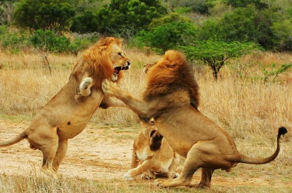 Zvířata v divočině