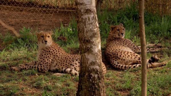 Příroda kolem nás: gepard a ledňáček