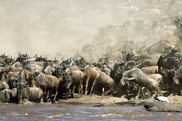 Dokument Dobrodružství v Serengeti