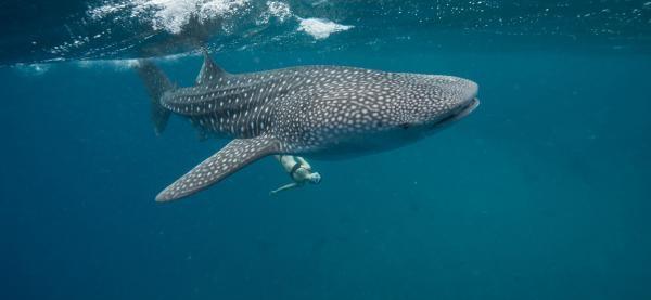 Dokument Cesta aneb Matka oceán