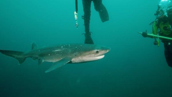 Dokument Žraloci z podsvětí