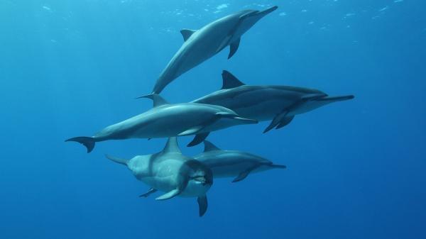Komunikace s delfíny