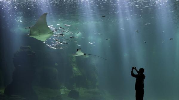 Nausicaá: Obří akvárium