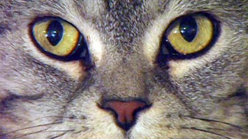 Jak se žije kočkám podle Drahomíry Vihanové