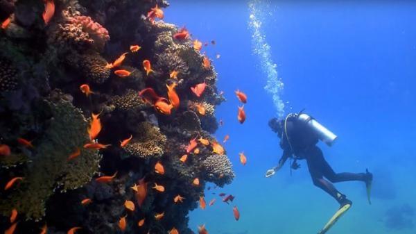 Krása podmorského sveta