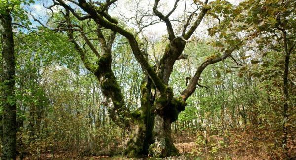 Dokument Lesy na prodej