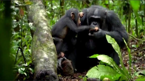Dokument Opičí rasa