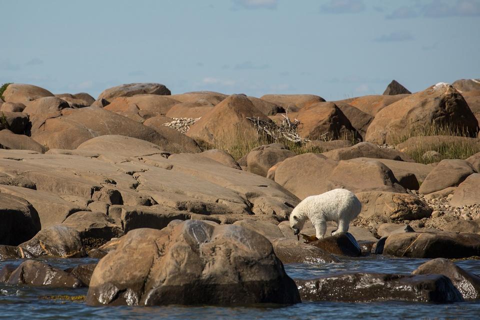 Documentary Léto ledních medvědů