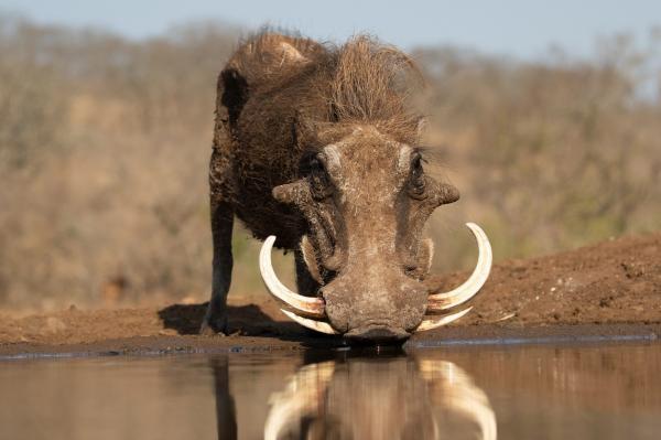 Napajedlo - africká zvířecí oáza