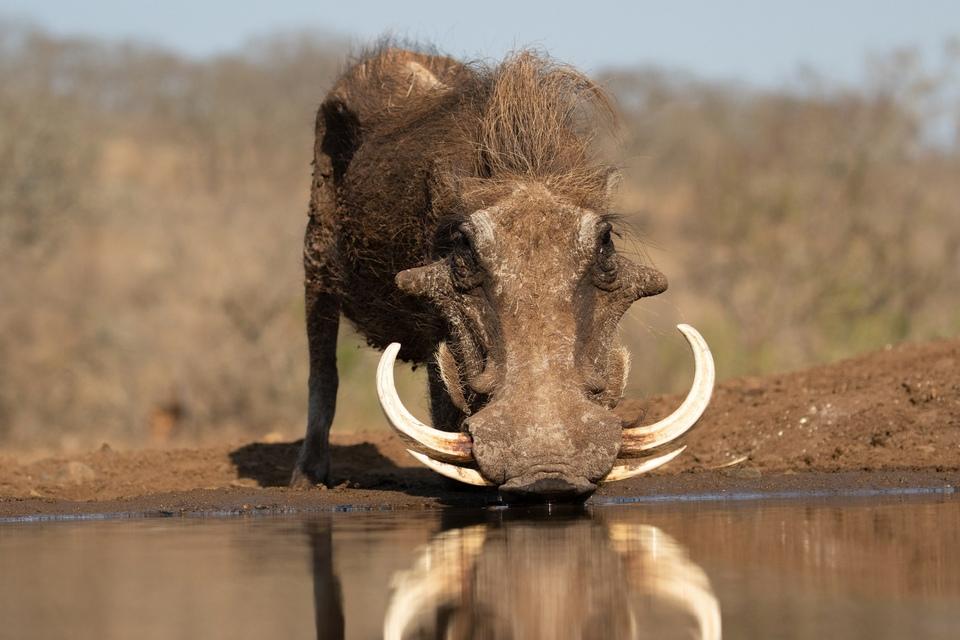 Dokument Napajedlo - africká zvířecí oáza