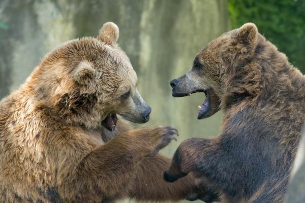 Životinjski klub boraca