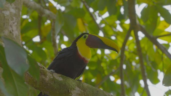 Divoká Kostarika