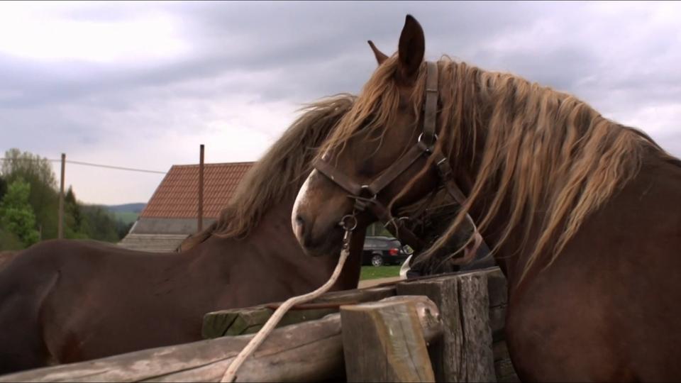 Dokument Svobodovi koně
