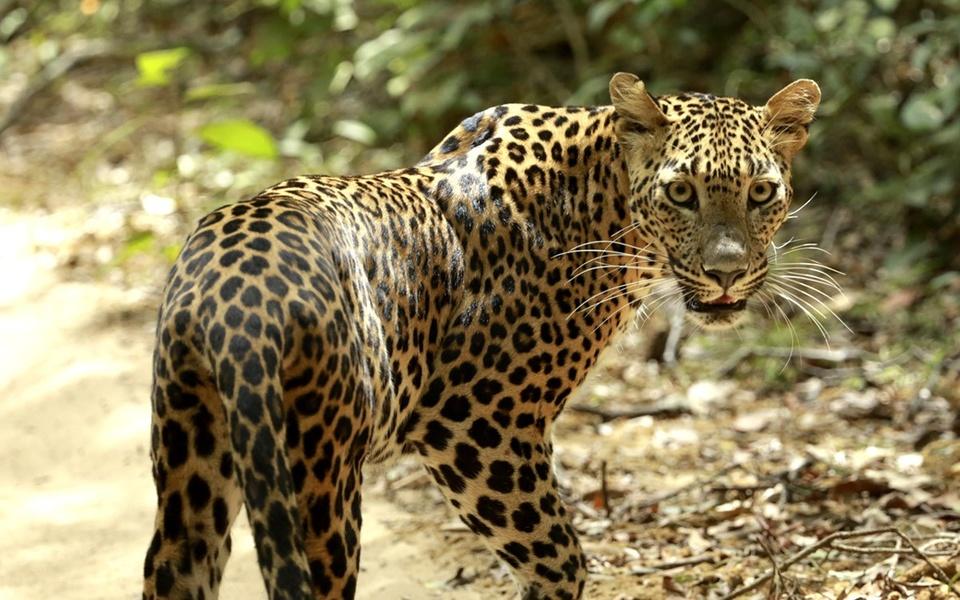 Dokument Země Jaguárů