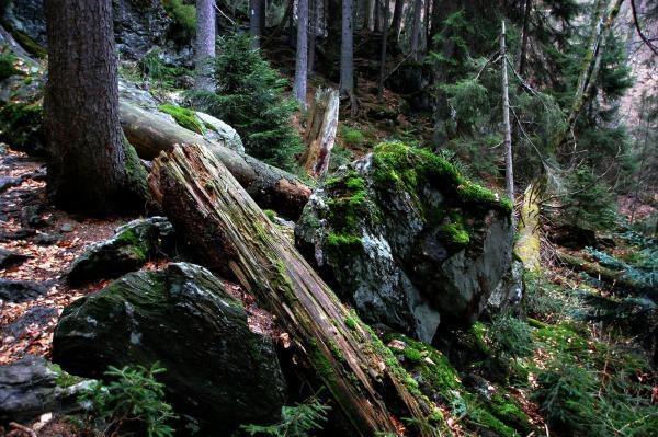 Magický Bavorský les