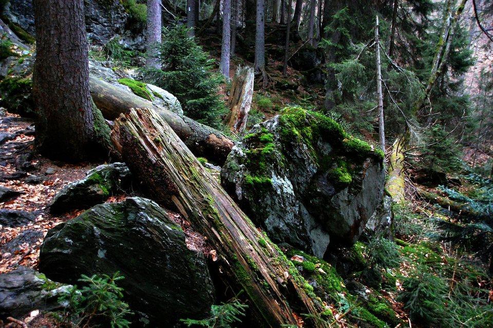 Dokument Magický Bavorský les