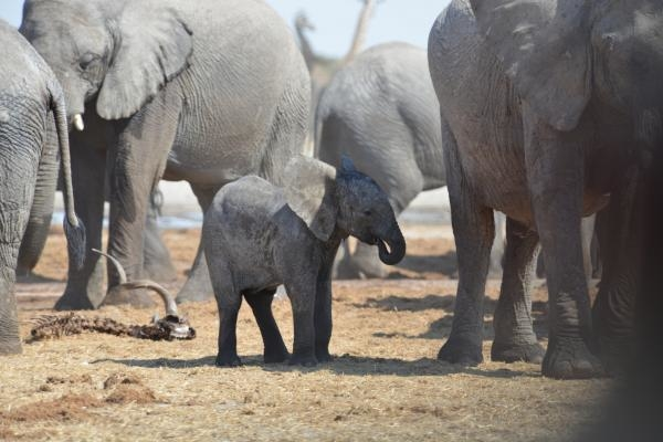 Dokument Boj o sloní trůn
