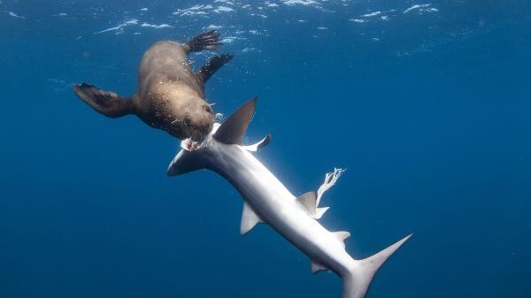 Dokument Žralok versus predátor