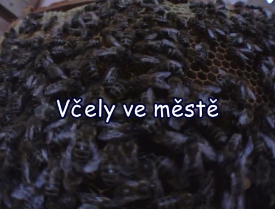 Dokument Včely ve městě