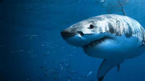 Žraloci mezi námi