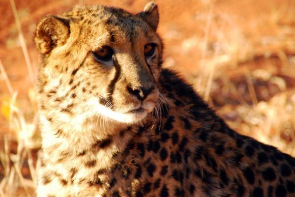 Namibie, země nedotčené přírody