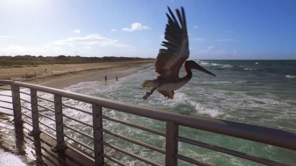 Dokument Živé pláže