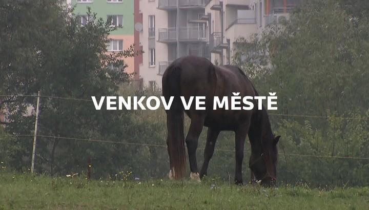 Documentary Venkov ve městě