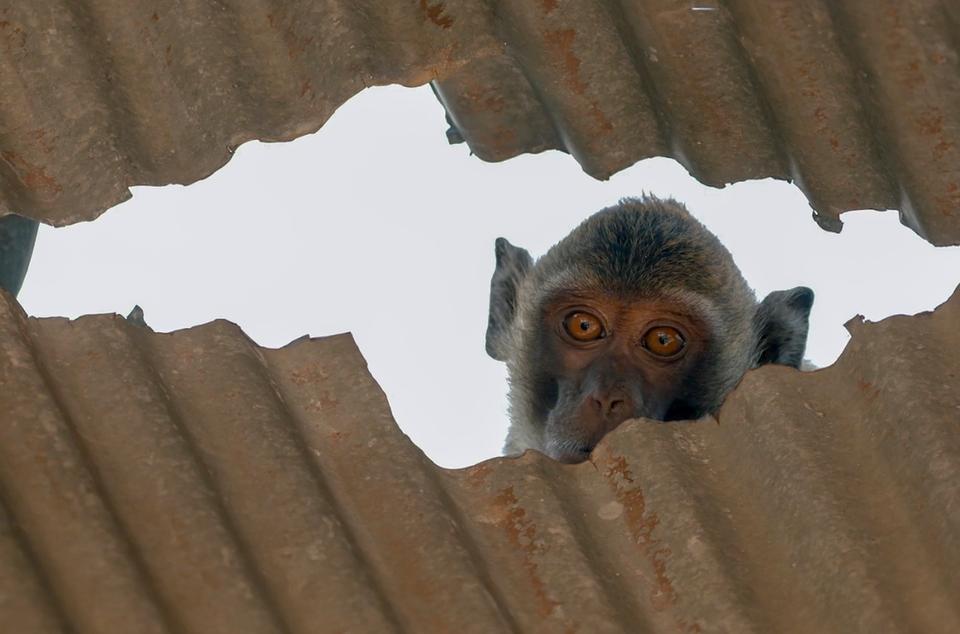 Dokument Opičí (r)evoluce