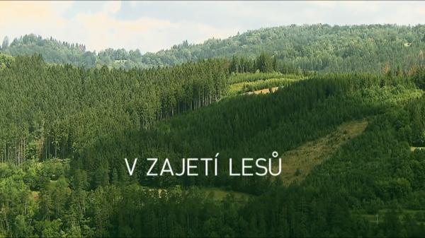 Dokument V zajetí lesů