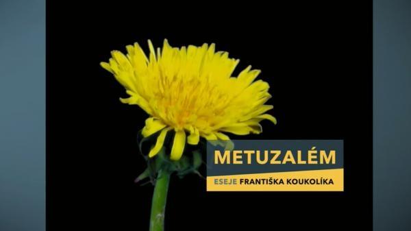 Dokument Metuzalém
