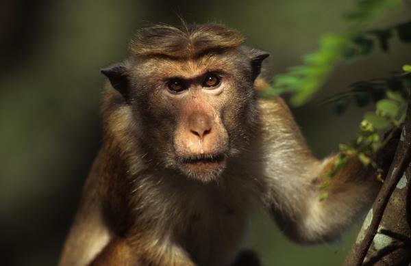 Chytré opice