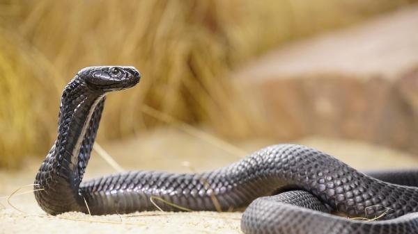 Najsmrtonosnije zmije na svijetu